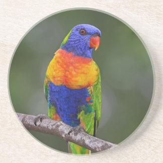 虹のLorikeetのTrichoglossusのHaematodusのオウム コースター