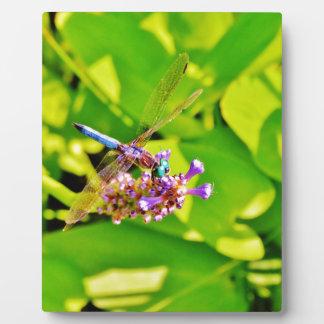 虹は紫色のピンクの花のトンボを着色しました フォトプラーク