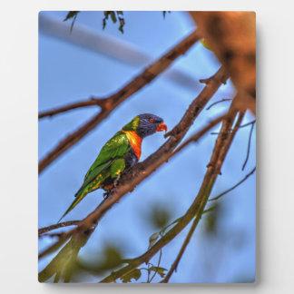 虹LORIKEETオーストラリアの芸術の効果 フォトプラーク