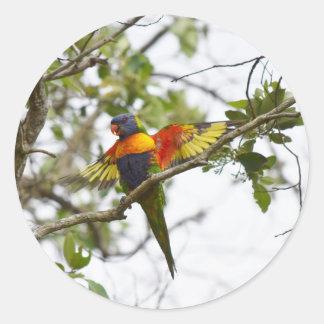 虹LORIKEET田園クイーンズランドオーストラリア ラウンドシール