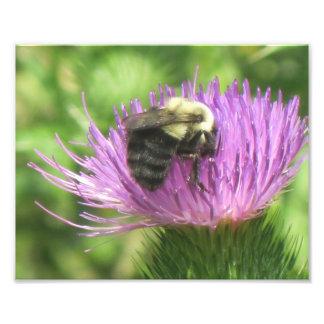蜂およびアザミの写真のプリント フォトプリント