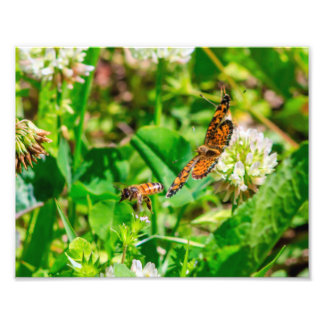 蜂および蝶 フォトプリント