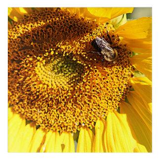 蜂が付いているヒマワリの中心 アクリルウォールアート