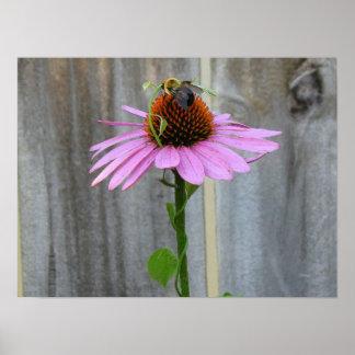 蜂との紫色のConeflower ポスター