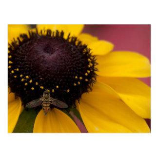 蜂の黒目のスーザンの授粉の写真撮影 ポストカード