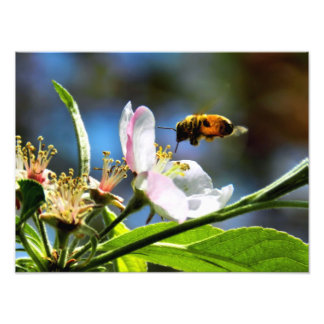 蜂及び白い花の写真撮影 フォトプリント