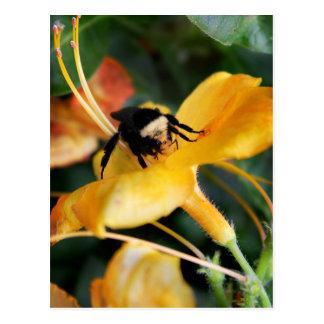 蜂蜜の蜂およびオニユリ ポストカード