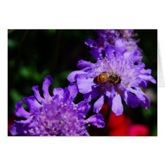 蜂蜜の蜂およびScabiosa カード