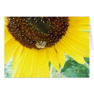 蜂蜜の蜂の挨拶状 カード