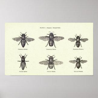 蜂蜜の蜂ポスター ポスター