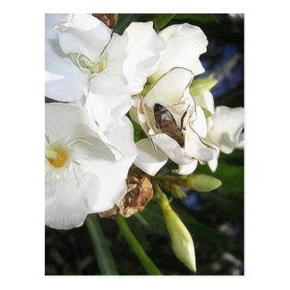 蜂1を持つ独身ので白いオレアンダー ポストカード
