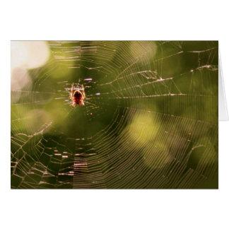 蜘蛛の巣 カード