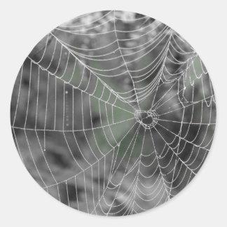 蜘蛛の巣 ラウンドシール