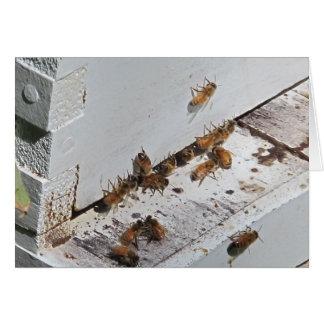 蜜蜂のはちの巣の入口 カード