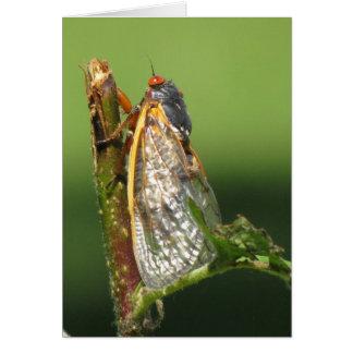 蝉の挨拶状 カード