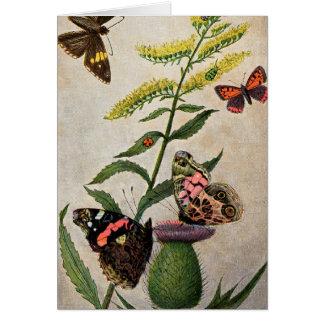 蝶およびアザミ カード