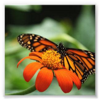 蝶およびオレンジ花 フォトプリント