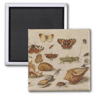 蝶および貝Magnent マグネット