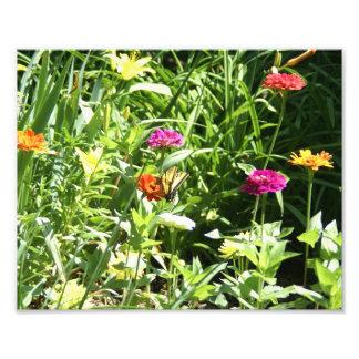 蝶が付いている花園 フォトプリント