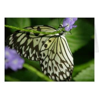蝶こんにちは カード