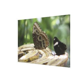 蝶のための食糧 キャンバスプリント