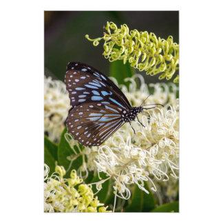 蝶の朝食 フォトプリント