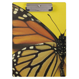 蝶の翼 クリップボード