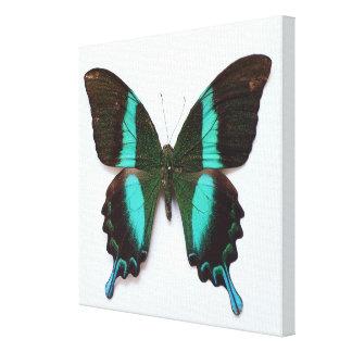 蝶はアジアおよびインドの地域で見つけました キャンバスプリント