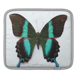 蝶はアジアおよびインドの地域で見つけました iPadスリーブ