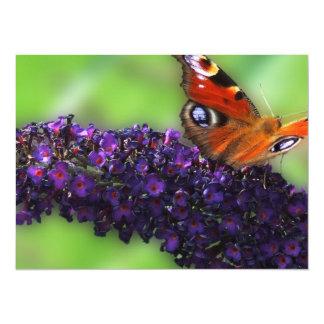 蝶ブッシュの海軍大将 カード