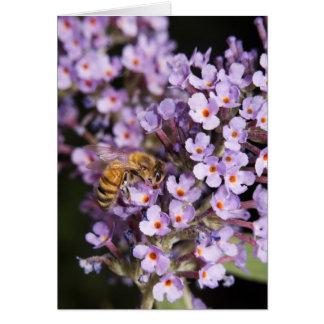蝶ブッシュカードの蜜蜂 カード