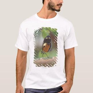 蝶マクロ Tシャツ