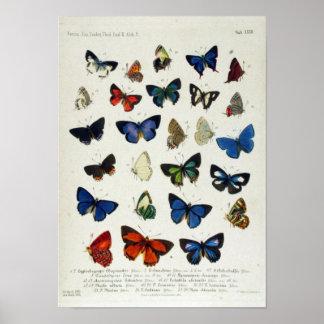 蝶ヴィンテージの博物学者の教育ポスター ポスター