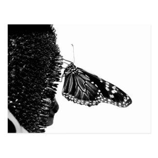 蝶内気なblacq ポストカード