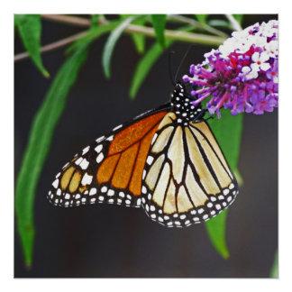 蝶完全なポスター ポスター