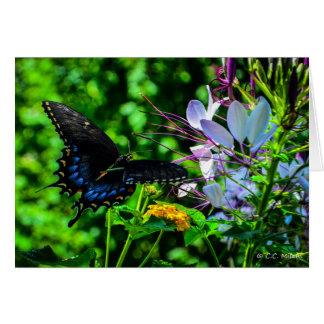 蝶庭の時 カード