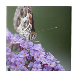蝶薮の美しい蝶 タイル