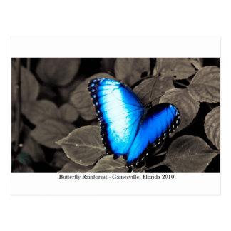 蝶雨林- Gainesville、FL 002 ポストカード