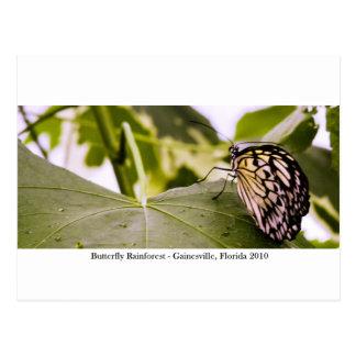 蝶雨林- Gainesville、FL 005 ポストカード