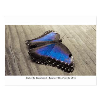 蝶雨林- Gainesville、FL 007 ポストカード
