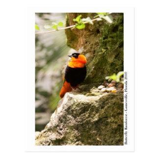 蝶雨林- Gainesville、FL 009 ポストカード