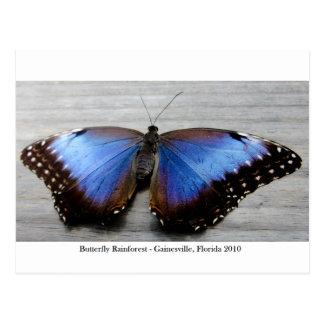蝶雨林- Gainesville、FL 010 ポストカード