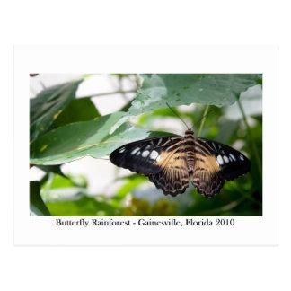 蝶雨林- Gainesville、FL 014 ポストカード