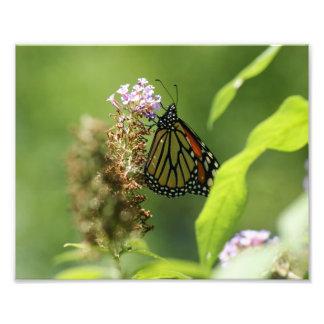 蝶10 x 8写真の印画 フォトプリント
