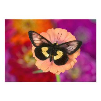 蝶11のSammamishワシントン州の写真 フォトプリント