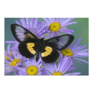 蝶13のSammamishワシントン州の写真 フォトプリント