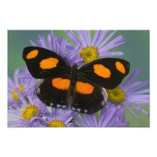 蝶14のSammamishワシントン州の写真 フォトプリント