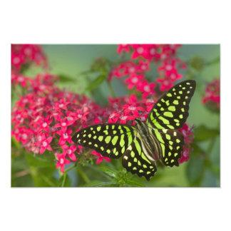 蝶16のSammamishワシントン州の写真 フォトプリント