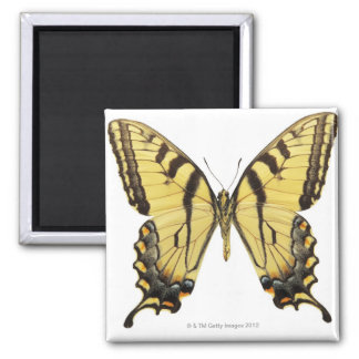 蝶2のクローズアップ マグネット