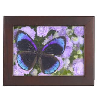 蝶2のSammamishワシントン州の写真 ジュエリーボックス